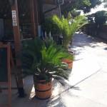 restaurant-emona-nesebar-50